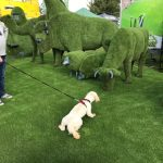 Dog interacting with Easigrass display