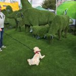dog interacting with easi-animals at royal county berkshire show