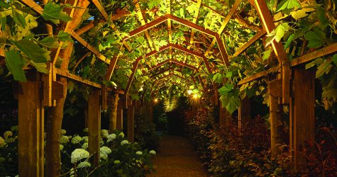 outdoor lighting in tunnel of trees