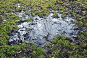 Mud patches in the grass