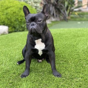 dog and child friendly artificial grass