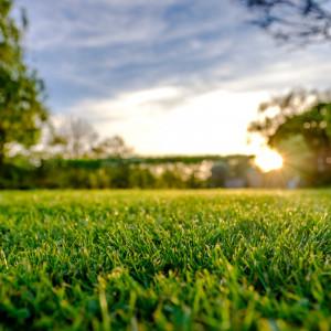 Sun shining over a grass garden