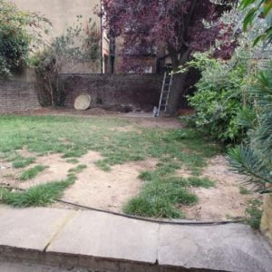garden with patches in the grass