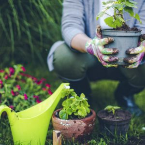 Person planting pots in the garden