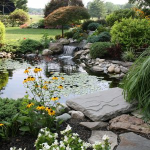 tranquil pond water with flowers and waterfall